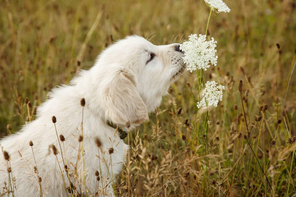 El uso de pesticidas y los riesgos para nuestros perros