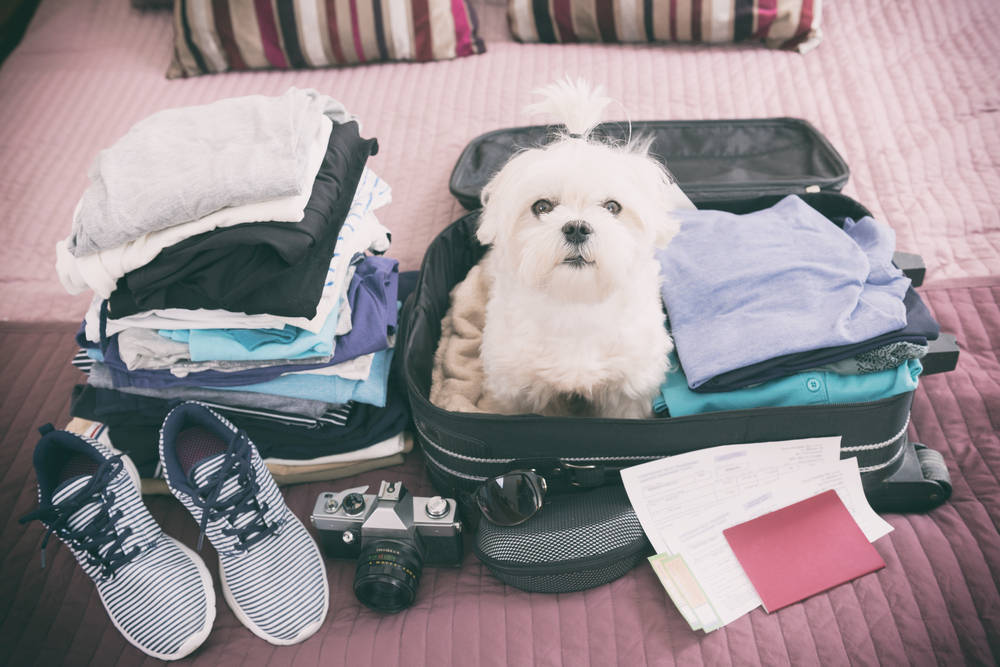 La importancia de viajar con tu mascota desde su juventud