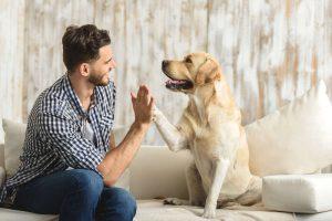 Protección legal para animales