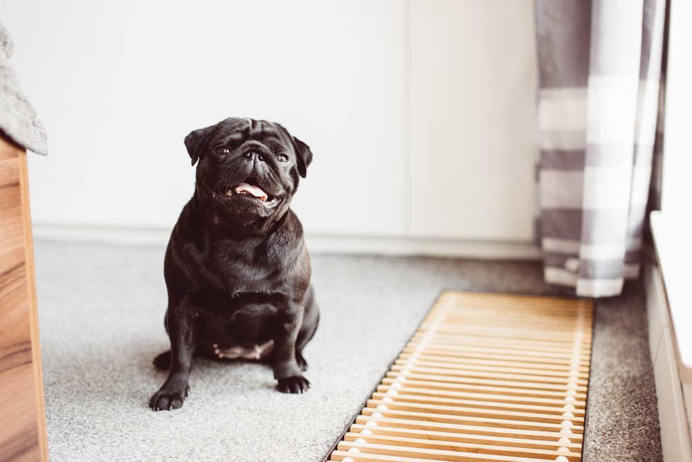 Cómo son los hoteles para perros