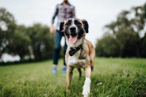 Las mascotas y su importancia