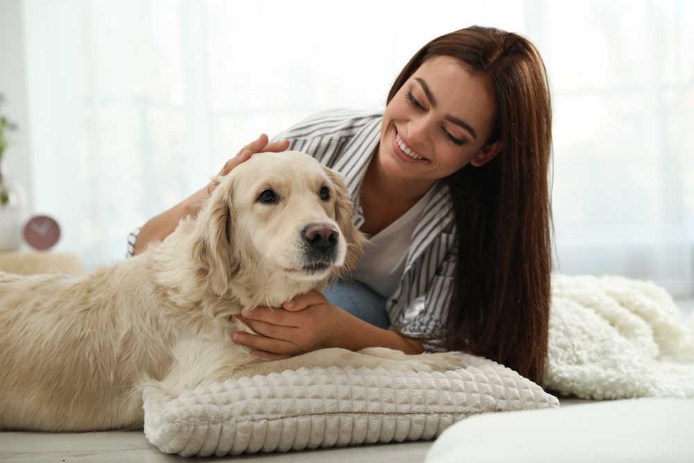 Las razas de perros más sociables