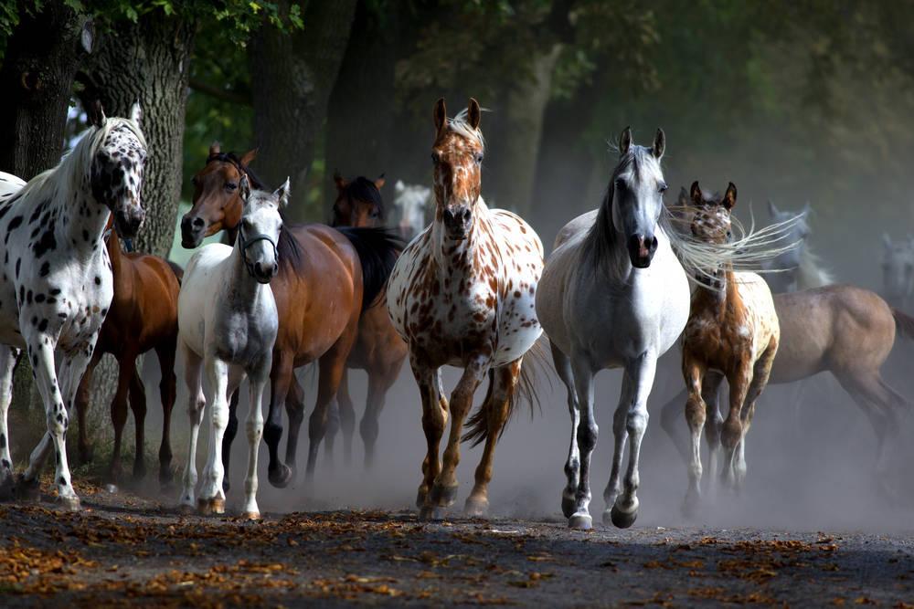 Las características de un criadero de caballos