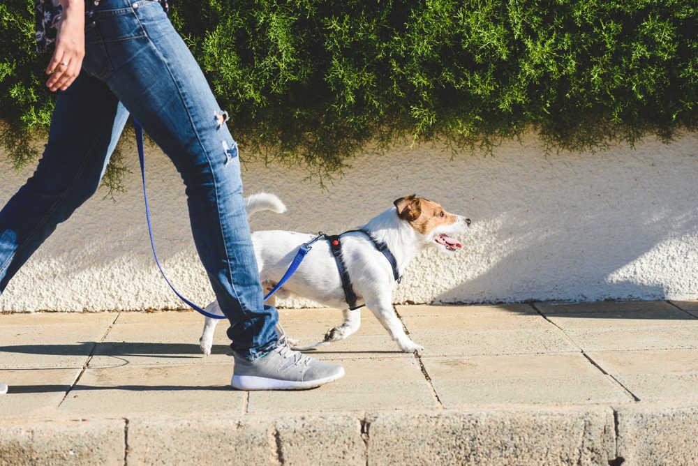 Todo lo que debemos saber sobre la responsabilidad civil cuando se tiene una mascota